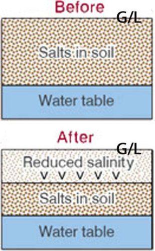 Soil in Salinity