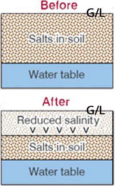 salinity-in-soil